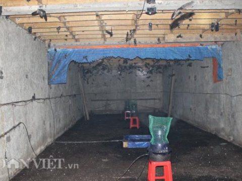 Một tầng nhà yến có chim về rất nhiều của anh Võ. Ảnh: Văn Long.